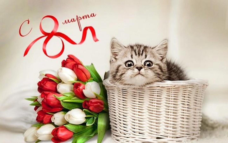 Поздравляем с 8 марта, милые дамы! | Сервис-Бит